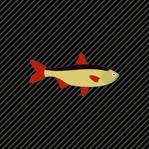 animal, fish, fishing, freshwater, nature, rudd, water icon