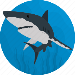 fish, food, sea, seafood, shark icon