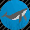 fish, food, sea, seafood, whale icon