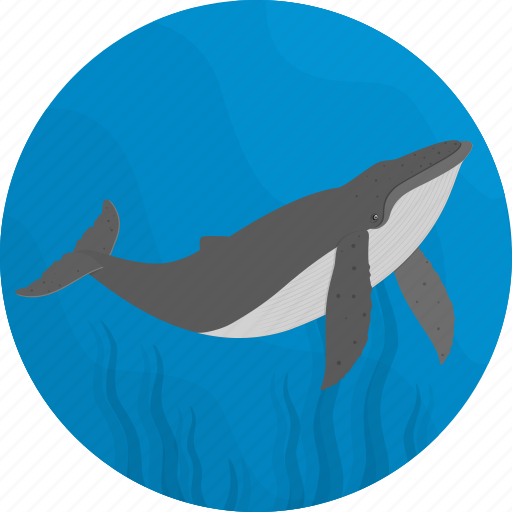 fish, food, sea, seafood, whale icon
