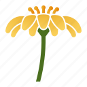 bloom, daisy, flower, innocence icon