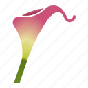 bloom, bulb, calla lily, florist, flower icon
