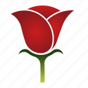 beauty, bloom, flower, love, rose icon