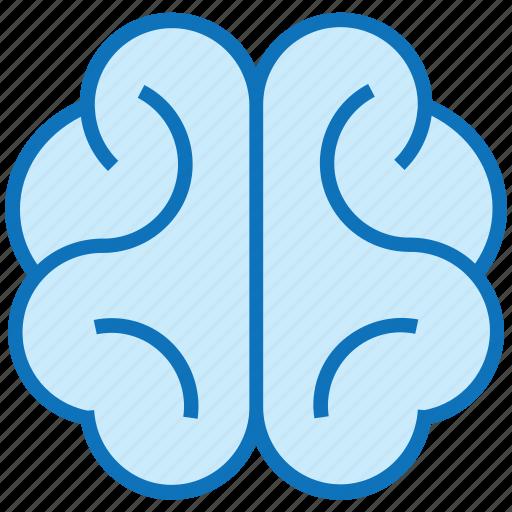 body part, brain, head, human, human brain, mind, organ icon