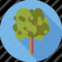 environment, nature, plant, tree