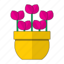 decoration, flowers, garden, horticulture