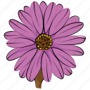 aster, aster flower, blossom, calendula, flower, freshness, nature icon