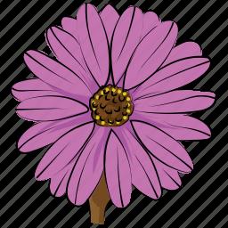 aster, aster flower, blossom, calendula, flower, freshness, nature icon