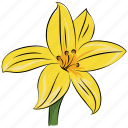 daffodil, floral, flower, natural, petal, seasonal, spring icon