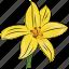daffodil, floral, flower, natural, petal, seasonal, spring icon