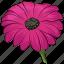 blossom, flower, freshness, gerbera, gerbera daisy, gerbera flower, nature icon