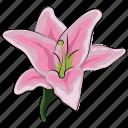 amaryllis, amaryllis flower, clematis, flower, holiday, pink, pink amaryllis icon