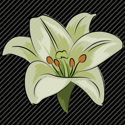 amaryllis, amaryllis flower, clematis, flower, holiday, white, white amaryllis icon