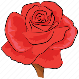 blossom, floral, flower, red, red rose, rose, rose flower icon