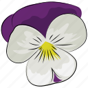 blossoming, floral, flower, petals, sagittaria graminea, spring, three icon