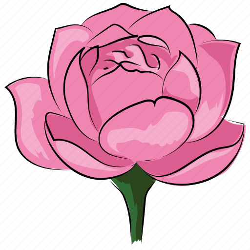 beauty, blossom, floral, pink, pink rose, rose, rose flower icon