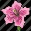 azalea, azalea flower, beautiful, beauty, flower, pink, pink azalea icon