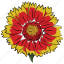 beauty, daisy sunflower, flower, image, nature, sunflower icon