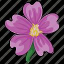 anemone, bloom, flower, natural, petal, seasonal, spring