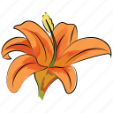 alstroemeria lavender, flower, lily, peruvian lily, season, spring, trumpet-shaped icon