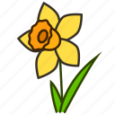 daffodil, ecology, environment, flower, garden, plant icon