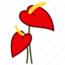 anthurium, environment, florist, flower, garden, nature, plant icon