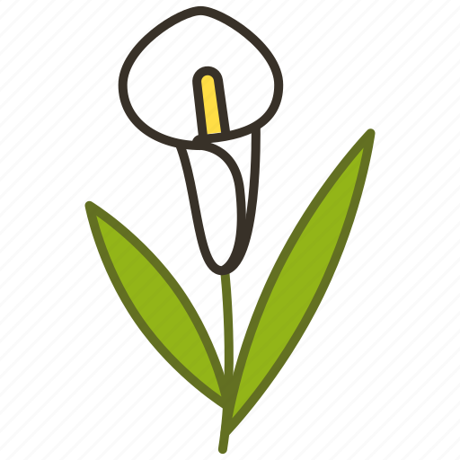 calla lilly, ecology, environment, floral, flower, plant, spring icon
