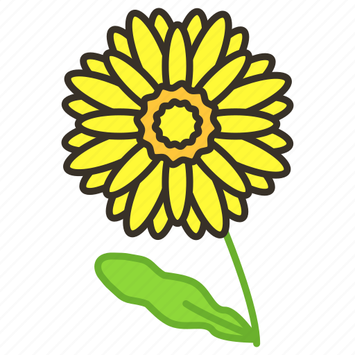 blossom, chrysanthemum, ecology, environment, flower, garden, plant icon