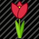 ecology, environment, flower, garden, plant, tulip, bloom