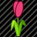 ecology, environment, flower, garden, plant, tulip, floral