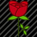 ecology, flower, garden, love, rose, valentines, flowers