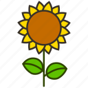environment, flower, garden, plant, sunflower, nature