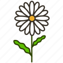 daisy, ecology, flower, garden, nature, plant icon