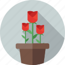 flower, flowers, garden, love, plant, rose icon