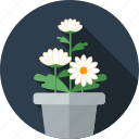 chrysanthemum, flower, flowers, garden icon