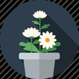 chrysanthemum, flower, flowers, garden icon