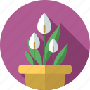 anthuriums, flower, flowers, garden, plant icon