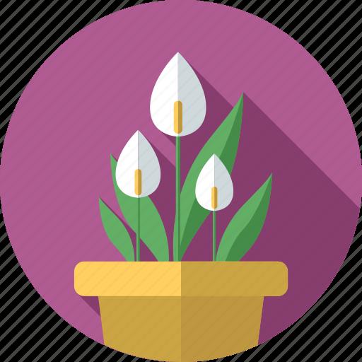 anthuriums, flower, flowers, garden, plant icon