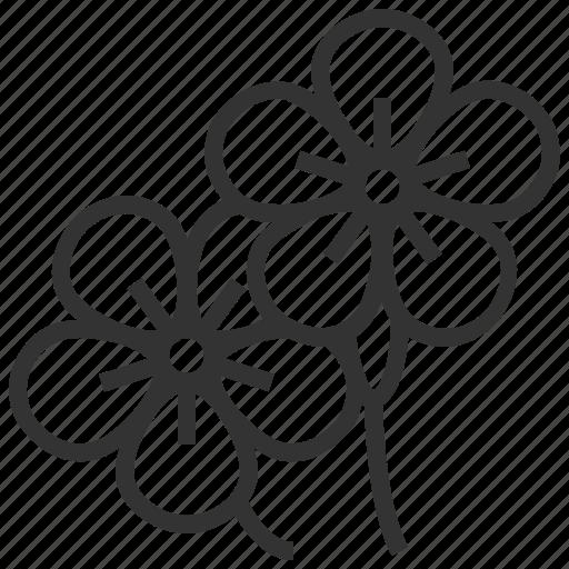 floral, flower, plant, saponaria icon