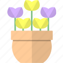 flowers, pot, tulip, tulips icon