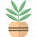 decor, flora, home plant, pots icon