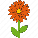 beauty, flower, nature, orange, summer icon