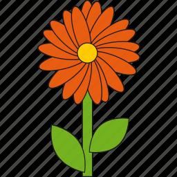 beauty, flower, nature, orange, summer icon