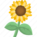flower, nature, plant, sunflower icon