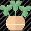 flora, nature, plant, pot icon