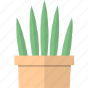 cactus, decoration, flower, pot