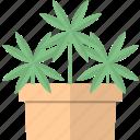 cannabis, garden, marihuana, plant