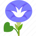 flora, floral, florist, flower, garden, morning glory