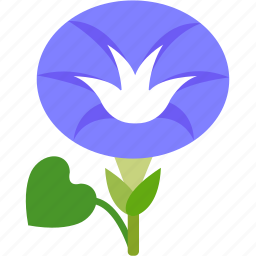 flora, floral, florist, flower, garden, morning glory icon