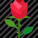 floral, florist, flower, garden, romance, rose, valentine